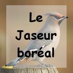 le jaseur b